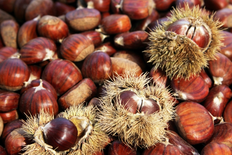 The thousand virtues of Corsican chestnut